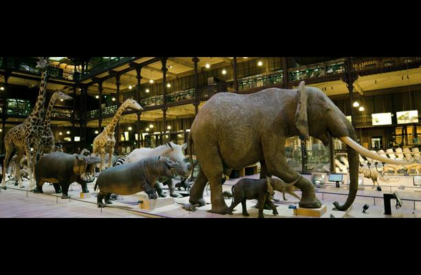 Grande galerie de l'évolution, galerie principale