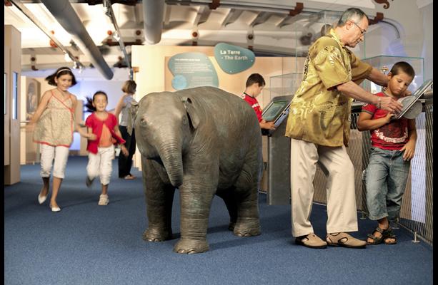 L'éléphanteau tactile devenu la mascotte de la Galerie